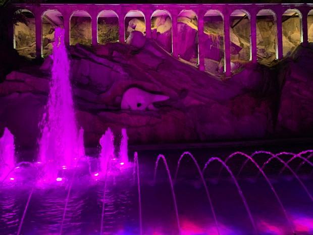 Фонтанът на Бунарджика светна в розово с точно определена цел!